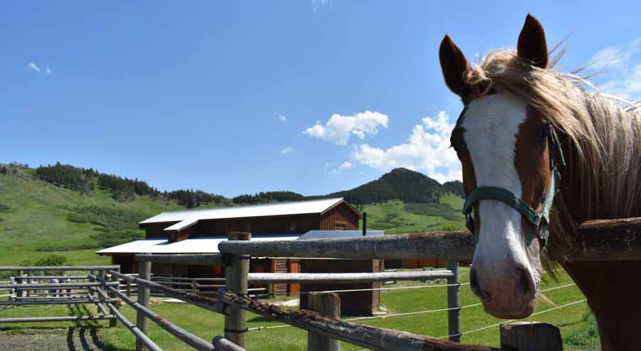 Equine Therapy For Addiction