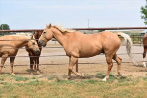 Equine Therapy for Addiction Treatment Montana